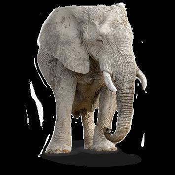 elephant-355